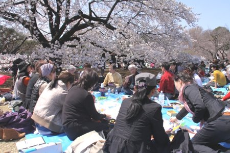The cherry blossom viewing party in Shinjuku
